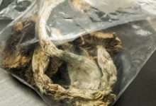 Photo of How to store Magic Mushrooms | Make your Shrooms Last Longer