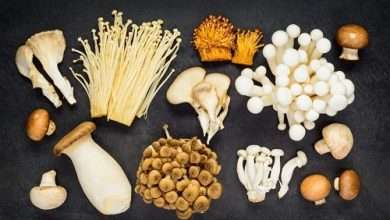 Photo of 10 Mushrooms that are NOT Psychedelic (Sorry, they Ain't Shrooms!)