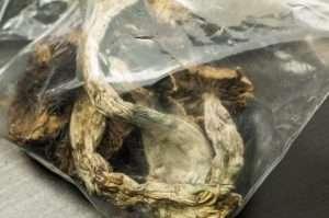 dried magic mushroom sealed tight in a zip lock