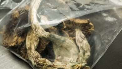 Photo of How to store Magic Mushrooms   Make your Shrooms Last Longer