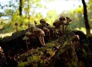 mushroom growing in a tree stump