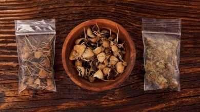 Photo of Weed & Mushrooms | Cannabis & Magic Mushroom Drug Interaction