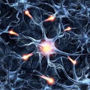 magic-mushrooms-on-neural-plasticity