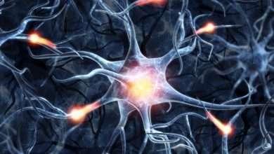 Photo of Psilocybin on Neural Plasticity: How Shrooms Rewire your Brain