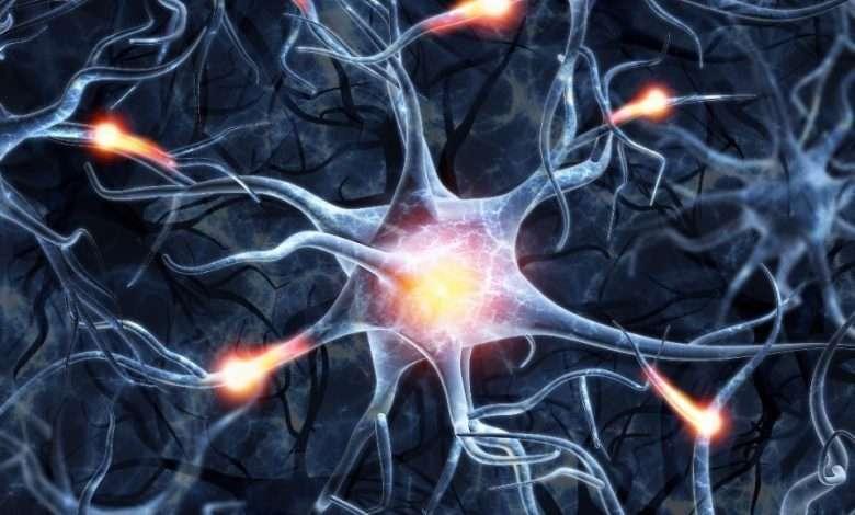 magic mushrooms on neural plasticity