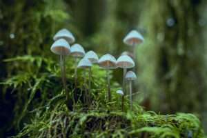 Magic mushroom in a moss covered ground in the forest