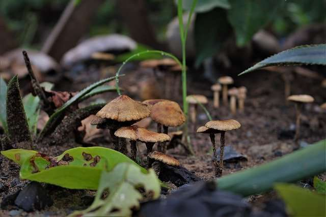 mushrooms growing in a wet environment