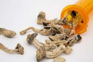 Photo of Mushroom Therapy: Psilocybin for Depression & Anxiety