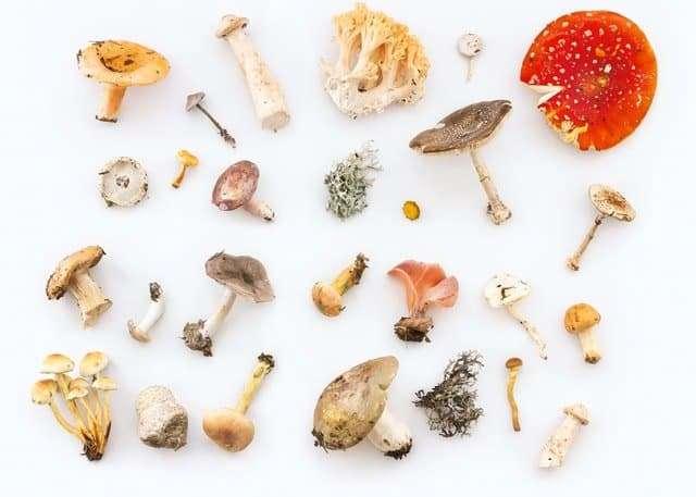 magic mushrooms on the floor