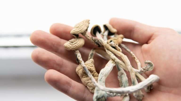 buying dried magic mushroom in hand