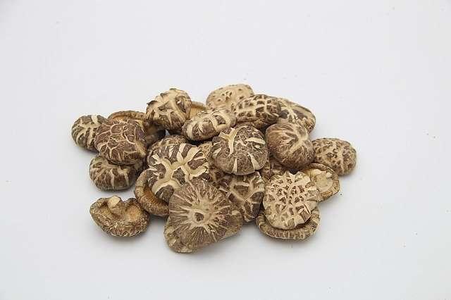 shiitake-mushroom