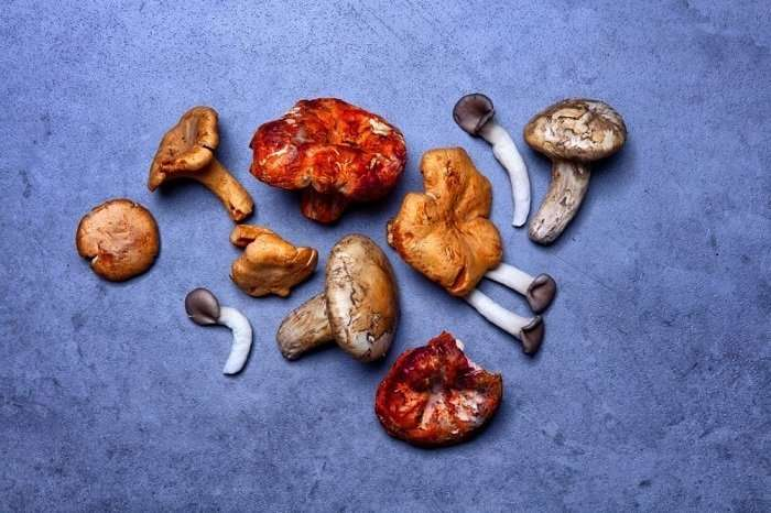 Different Kinds of Shrooms