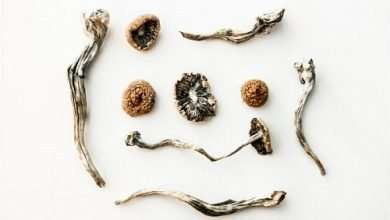 Photo of How Long Are Psychedelic Mushrooms Good For?